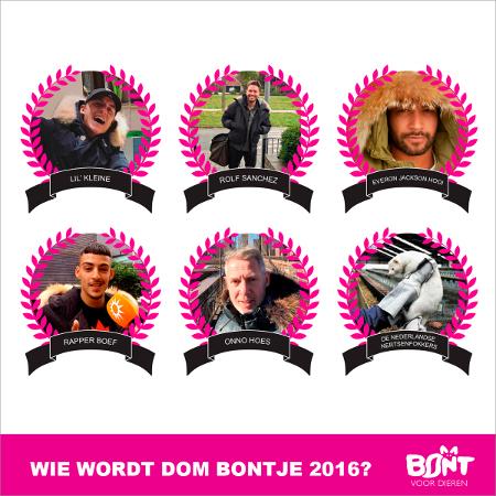 Nominaties Dom Bontje 2016 bekend