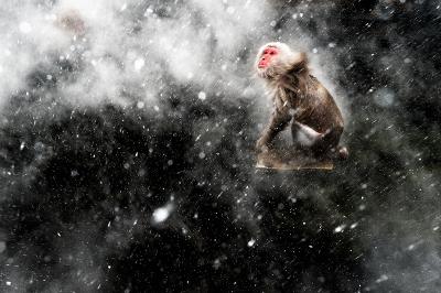 ['Snow Moment' van Jasper Doest (c)]