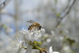 De Wilde Bijenlinie gaat van start dankzij de Postcode Loterij