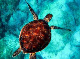 Search image zeeschildpad